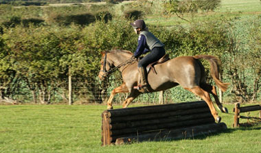 About Alice Reins - Alice Reins Horse Jumping